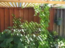 easy vertical gardening ideas for