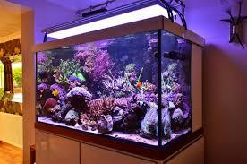 orphek aquarium led ighting