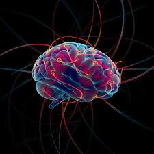 Por qué nuestro cerebro necesita tanta energía?