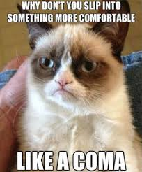 best-funniest-grumpy-cat-1.jpg via Relatably.com