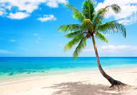 Tropical Beach Wallpaper - Tropical ...