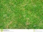 bahama grass