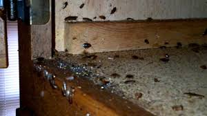 Small Brown Bugs In Kitchen German Cockroach Control Budget Pest Control Pittsburgh