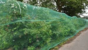 how to keep birds away from garden. Heavy Duty Bird Ting Protect Plants And Fruit. Vertical Gardening How To Keep Birds Away From Garden