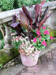 Home Decor Charming Container Garden Ideas Images Decoration For Container Garden Ideas Uk