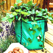 Kitchen Gardening For Beginners Very Cheap Pavement Designs Remodel Ideas Before And Kitchen U