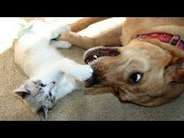 cats and dogs playing. Brilliant And Cute Cats And Dogs Playing Together  Funny Dog U0026 Cat Compilation For Cats And Dogs Playing Y
