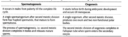 Important Questions For Cbse Class 12 Biology Gametogenesis