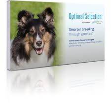 Dog Breed Compatibility Chart Optimal Selection Canine Genetic Breeding Analysis