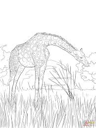 West African Giraffe Coloring Page Free Printable Coloring Pages