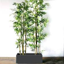 order plants online. Buy Artificial Plants Online Order 6 Feet Bamboo In 3 Long Planter .