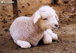 """Résultat de recherche           d'images pour """"mouton humour"""""""