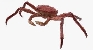3D model Alaskan King Crab Walking Pose ...