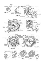 the eye lens choroid sclera cornea and optic nerve