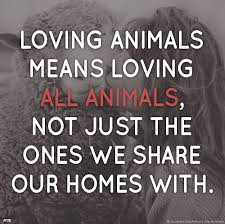 Loving Animals Means Loving All Animals Not Just The Ones We Share Impressive Love Animal Quotes