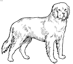 Small Picture Fresh Dog And Cat Coloring Pages Top Kids Colo 5568 Unknown