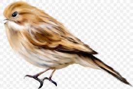 Bird Beak Chart Bird Computer File Png 1280x860px Bird Adobe Freehand