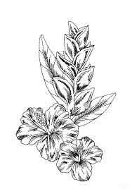 Floral Sketch Designs Free Tropical Flower Drawings Download Free Clip Art Free