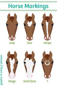 Horse Face Markings Chart Horse Color Chart Horse