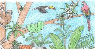 Rainforest Coloring Page | Rainforest Alliance