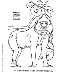 baboon animal coloring pages