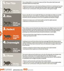 Overweight Cat Chart Body Score Chart For Cats Petcurean