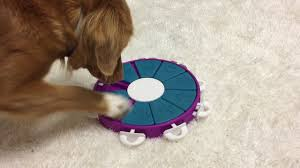 the 19 best puzzle toys that actually help bored dogs