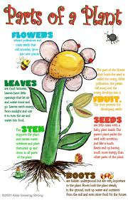 Parts Of A Plant Kids Growing Strong