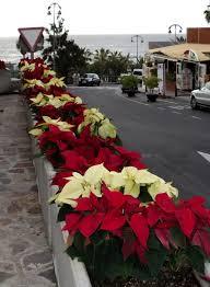 Es Weihnachtet Sehr Auch Auf Teneriffa Marburg Myheimatde