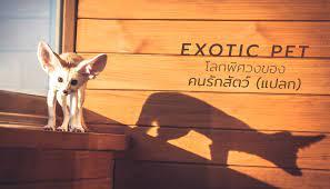 Exotic Pet โลกพิศวงของคนรักสัตว์ (แปลก) - TipsDD