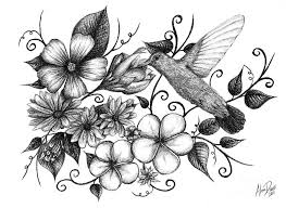 hummingbirds and flowers drawing. Exellent Hummingbirds Nature Drawing  Hummingbird And Floral Sketch By Alina Davis Hummingbirds Flowers G