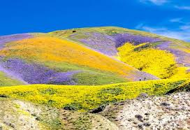 photos california bursts with spring colors