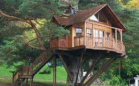 treehouse masters. Tree Treehouse Masters
