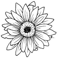 Small Picture 65 best DIBUJOS images on Pinterest Drawings Drawing and Flower