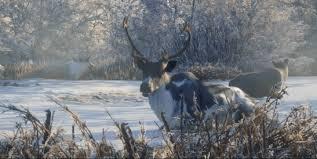 Reindeer Thehunter Call Of The Wild Wiki Fandom