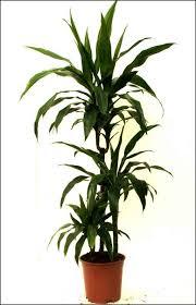tropical house plants photo