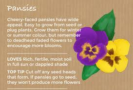 these garden favourites are easy plants to grow from seed but even easier from plug plants