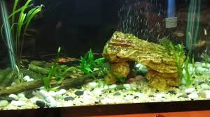 Fish Tank 20 Gallon Fish Tank New Fish Update Youtube