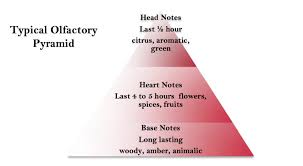 Fragrance Note Chart Pamper My