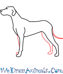 dogs drawings step by step. Beautiful Dogs Print Tutorial On Dogs Drawings Step By G