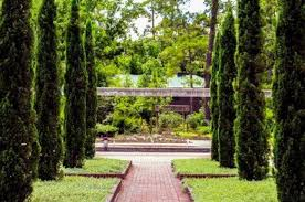 mediterranean garden plantings such as italian cypress trees line the existing cypress promenade in the renaissance