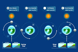 Solunar Fishing Can Moon Phases Help Your Catch Rate