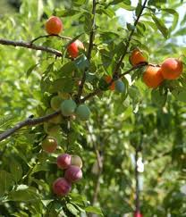 How To Grow An Avocado Tree  TipNutcomHow To Graph A Fruit Tree
