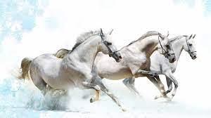 Horse Art HD desktop wallpaper ...