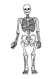 Small Picture Beautiful Skeleton Coloring Pages Pictures Coloring Page Design