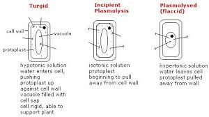 Water Potential Equation Cell Structure And Function Physics Made Easy