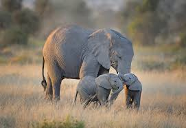 Image result for amazing animals elephants