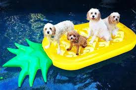 pool floats for dogs. Simple Floats In The Past Few Years Pool Floats Have Gone From Staid Blue Rectangles To  Every Color And Shape Imaginable You Can Now Buy Pegasus Floats Pizza  Pool Floats For Dogs R
