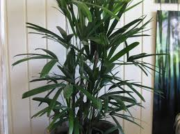 office pot plants. office 39 ravishing indoor plants health archives home design with black magnificent the fern forest nursery prettiest along gray pot on grey glass