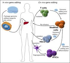 Genome Editing A Genome Editing Primer For The Hematologist Blood Journal
